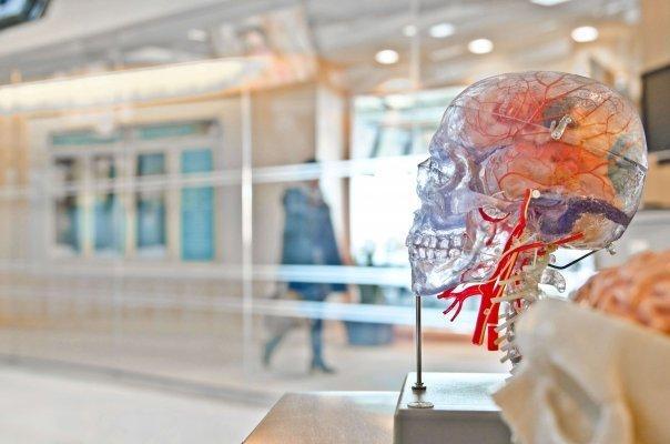 Comment les acides gras essentiels (AGE) agissent sur le cerveau et les tissus