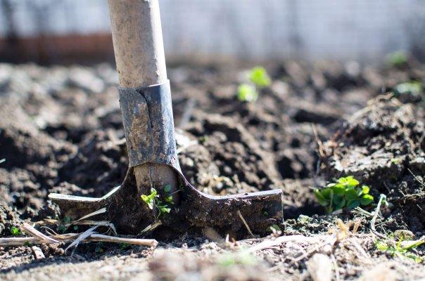 Vous avez le pouce vert? Mieux vaut jardiner à l'extérieur!