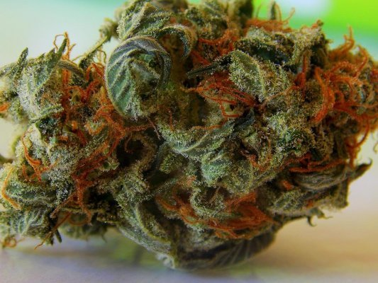 Le cannabis crée des tensions à Kanesatake