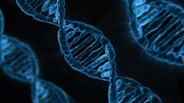Un gène du cannabis chez l'être humain?