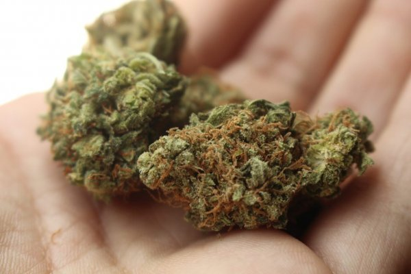 Découvrir le cannabis de façon sécuritaire